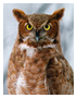owl[1].png